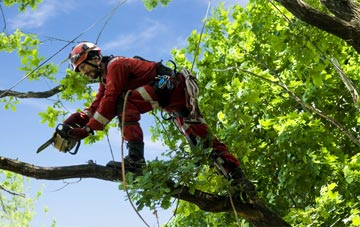 find trusted rated East Lothian tree surgeons