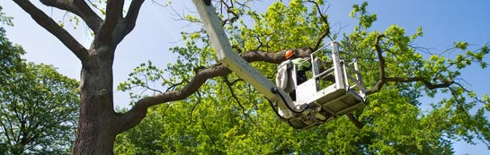 East Lothian tree surgery services