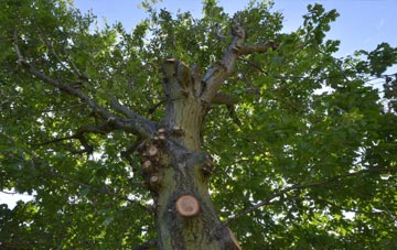 what is East Lothian tree surgery?